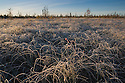 Grass covered with hoar frost in swamp, northern Yukon, Canada