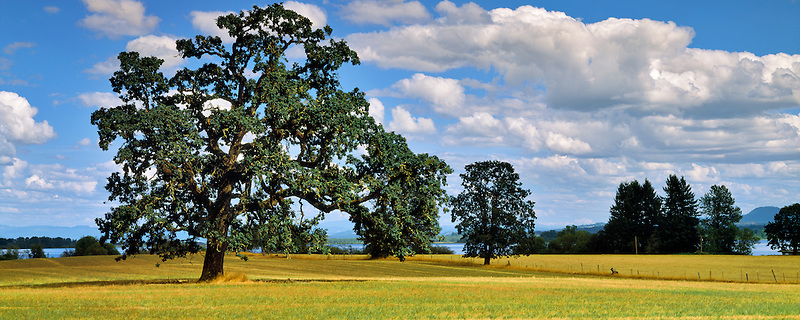 Pasture with oak trees. Fern Ridge Reservoir in background, Oregon.
