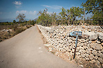 Country road with stone wall near Llubi, Mallorca