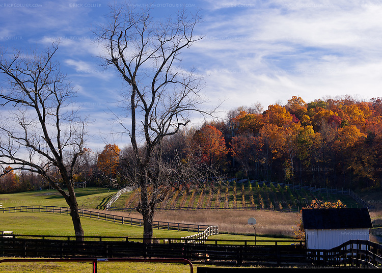 Visitors who venture to the end of the back yard at Aspen Dale Winery can spy a vineyard in the distance, between the surrounding working horse farm and the woods beyond.