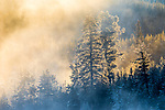 USA, Wyoming, Yellowstone National Park, geyser mist