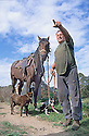 Grazier with horse and dogs on his property which includes Wollondilly River, source of Hawkesbury-Nepean. New South Wales
