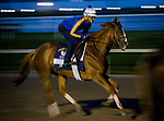 HALLANDALE BEACH, FL - JANUARY 25: Stellar Wind gallops in preparation for the Pegasus World Cup Invitational at Gulfstream Park Race Track on January 25, 2018 in Hallandale Beach, Florida. (Photo by Alex Evers/Eclipse Sportswire/Breeders Cup)