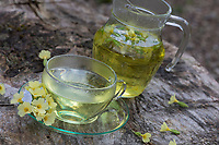 Schlüsselblumenblüten-Tee, Schlüsselblumentee, Schlüsselblumen-Blüten, Tee, Kräutertee, Heiltee, Blütentee aus Blüten von Schlüsselblume. Hohe Schlüsselblume, Wald-Schlüsselblume, Waldschlüsselblume, Primel, Primula elatior, Oxlip, true oxlip, tea, herbal tea, herb tea, Paigles, La Primevère élevée, Primevère des bois