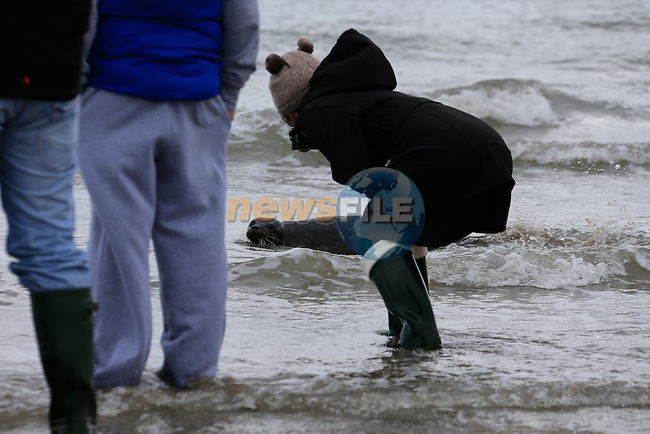 Hudaini is released by to the sea at Seapoint.<br /> Picture Fran Caffrey www.golffile.ie