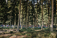 racing through the forest<br /> <br /> 59th Grand Prix de Wallonie 2018 <br /> 1 Day Race from Blegny to Citadelle de Namur (BEL / 206km)