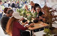 Nederland - Amstelveen - 2018. Cherry Blossom Festival in het Amsterdamse Bos . Het Japanse Hanami Matsuri (Kersenbloesem festival) markeert de start van de lente. Workshop bonsai.  Foto mag niet in negatieve context worden gepubliceerd.   Foto Berlinda van Dam / Hollandse Hoogte