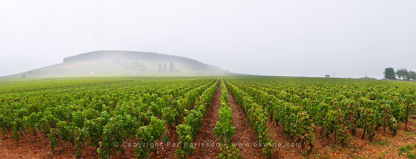 vineyard corton and c-charlemagne vyd aloxe-corton cote de beaune burgundy france