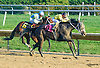 Lake Ouachita winning at Delaware Park on 10/14/15