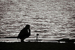 A silhouetted woman squatting on the beach with camera and tripod waiting for a shot.
