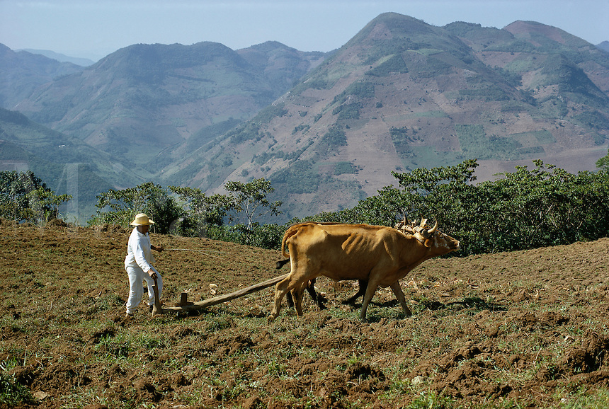 Indian plowing field in Sierra de Puebla mountains, Puebla State, Mexico..