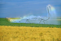 irrigating crop<br /> Monarch<br /> Alberta<br /> Canada