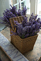 Freshly picked lavender in an old picnic basket
