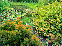 Pond at Hughes Water Gardens, Oregon