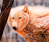 Sandi, REALISTIC ANIMALS, REALISTISCHE TIERE, ANIMALES REALISTICOS, paintings+++++thedaystarII,USSN72,#a#, EVERYDAY ,wolf,wolves ,wolf,wolves ,puzzles