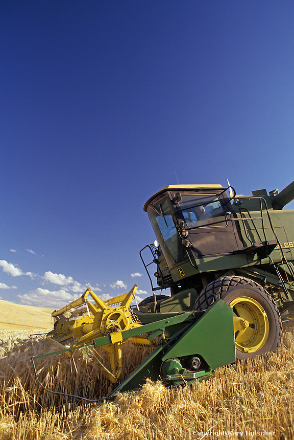 Combine harvesting wheat. WA. MR
