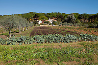 La Domaine les Bouis, Ramatuelle, near Saint Tropez, France, 16 October 2013. The farm belongs to the owner of Club 55, Patrice De Colmont, and all the vegetables, wine and olives produced organically and on principles of permaculture, supply Club 55's restaurant.