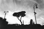Cypress Tree, Rome, Italy