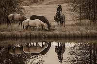 Cowboy on horseback reflecting in pond