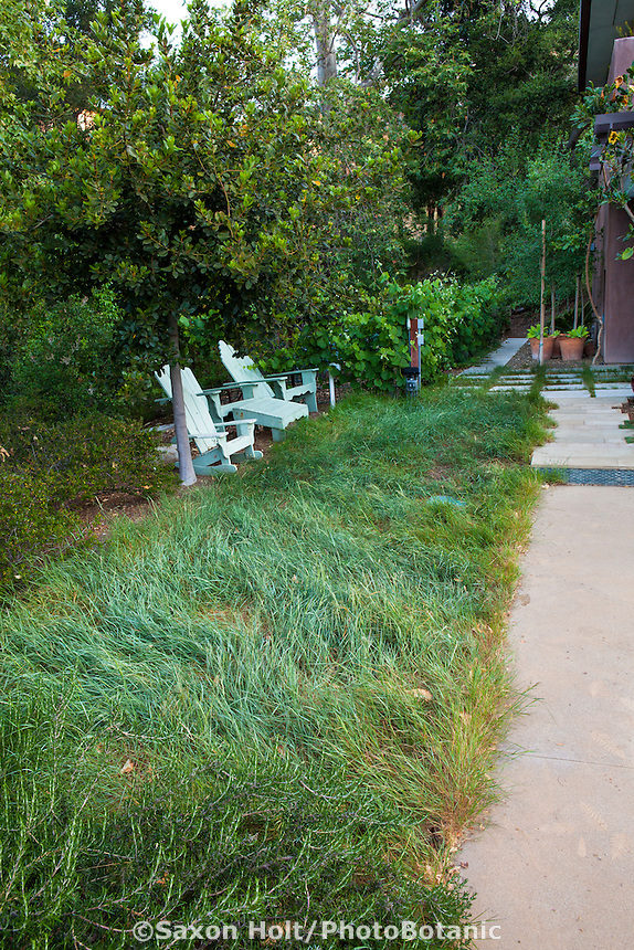 Unmowed native grass as meadow lawn, Coyote House, SITES® residential home with sustainable garden Santa Barbara California, Susan Van Atta design