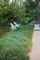 Unmowed native grass as meadow lawn, Coyote House, SITES® residential home with sustainable garden Santa Barbara California, Susan Van Atta design