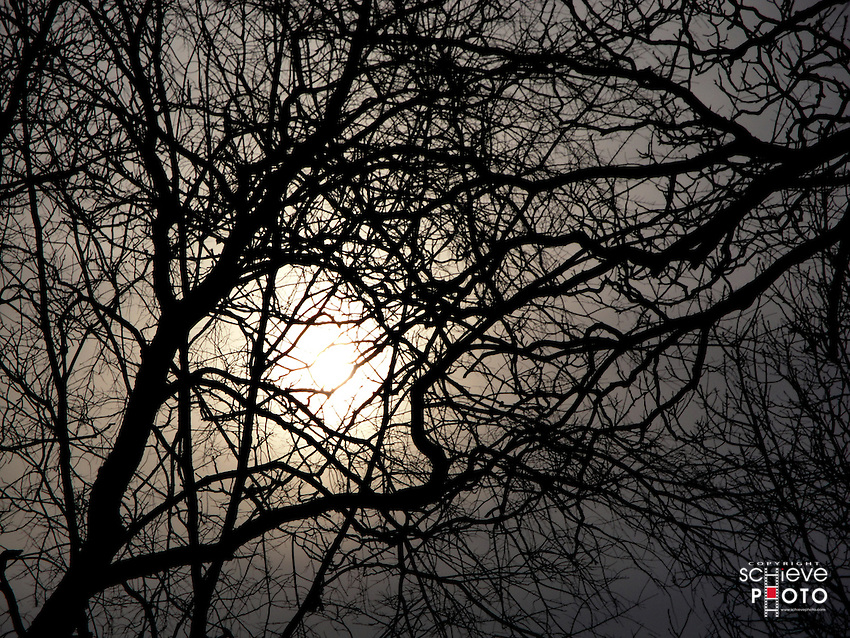 Winter sun through bare trees.