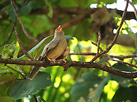 Stock image babbler singing on a tree branch in the thick of dense jungle in India.<br />