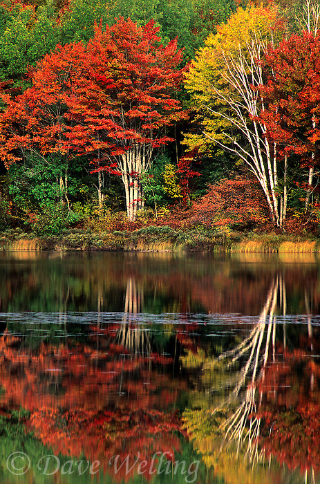 745686041 trees in fall color reflected in thornton lake in the upper peninsula of michigan
