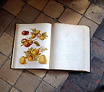 Pages from the Hereford Pomona.  A book which identifies the many apple varieties that eixisted in the 19th century.