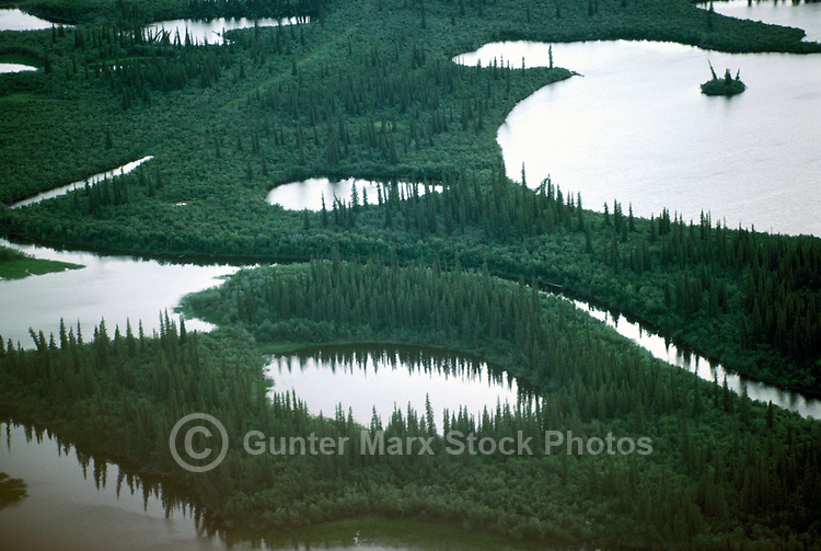 Mackenzie River Delta near Inuvik, NWT, Northwest Territories, Arctic Canada - Black Spruce Trees, Aerial View