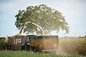 28/08/18 - CREVANT LAVEINE - PUY DE DOME - FRANCE - Recolte de maïs d ensilage - Photo Jerome CHABANNE