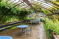 France, Loiret ('(), La Bussière, jardin du château de la Bussière, le potager, la serre ancienne sous la pluie