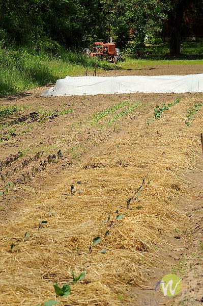 Mary Ann Banks organic garden. Garden beds.