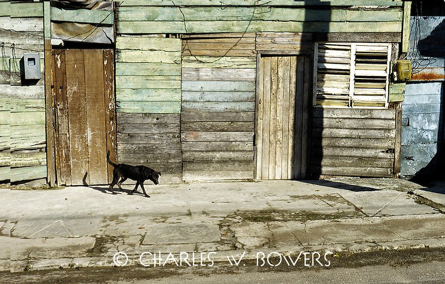 Everyday Cuba and it's hot, even for the dogs<br />