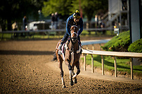 LOUISVILLE, KY - MAY 01: Farrell gallops in preparation for the Kentucky Oaks at Churchill Downs on May 01, 2017 in Louisville, Kentucky. (Photo by Alex Evers/Eclipse Sportswire/Getty Images)
