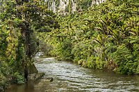 Pororari River and native forest in Punakaiki, Paparoa National Park, Buller Region, West Coast, New Zealand, NZ