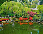 Portland, OR:  Washington Park - Willows and azaleas reflect on the Strolling Pond, in the Japanese Garden