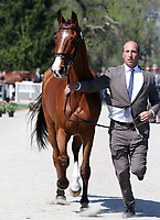 LEXINGTON, KY - April 26, 2017. #59 Ringwood SKy Boy and Tim Price from New Zealand at the Rolex Three Day Event First Horse Inspection at the Kentucky Horse Park.  Lexington, Kentucky. (Photo by Candice Chavez/Eclipse Sportswire/Getty Images)