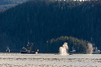Commercial fishing boats by whales feeding on Herring in the Sitka Sound area, southeast, Alaska.