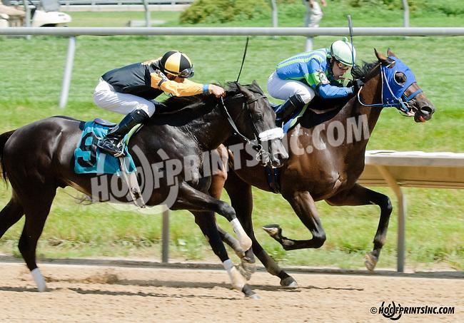 Big Zapple winning at Delaware Park on 6/29/13