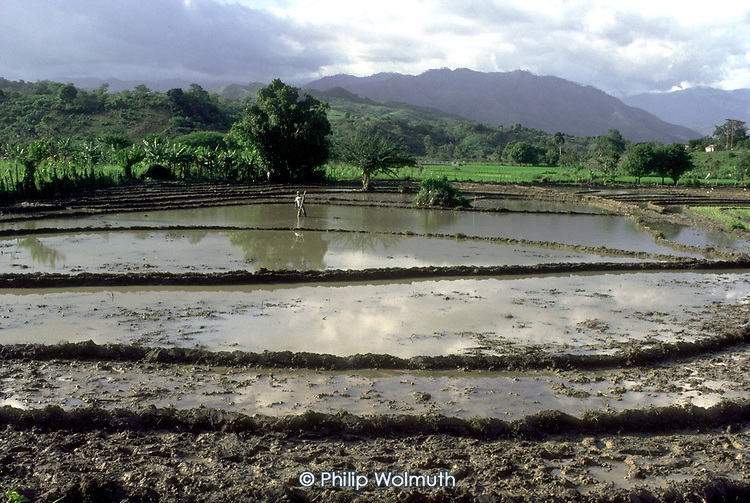 A farmer tends his irrigated rice-fields, Dominican Republic