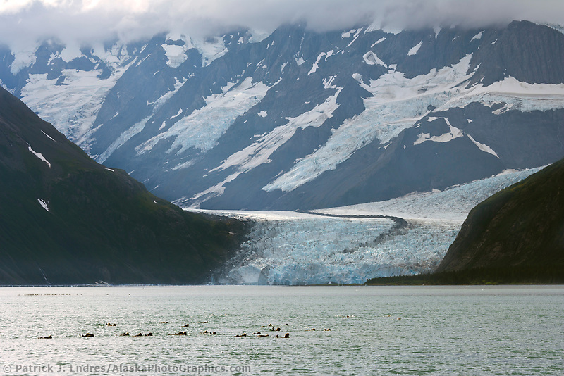 Surprise glacier, Chugach National Forest, Chugach mountains, Prince William Sound, Alaska.
