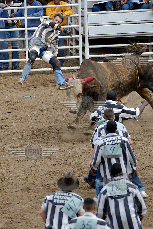 A bull flips a prisoner during Guts and Glory, the last and most dangerous part of the rodeo. Prisoners have to grab a poker chip tied to the Bull's forehead. It is part of the Angola Prison Rodeo, an innitiative that has helped transform Angola Prison from the most violent maximum security prison in the country into one of the safest.