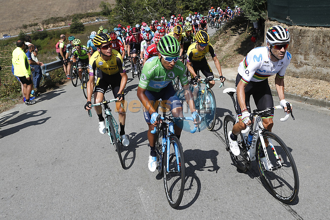 World Champion Alejandro Valverde (ESP) and Nairo Quintana (COL) Movistar Team wearing the Green Jersey ahead of Sepp Kuss (USA) Team Jumbo-Visma on the final climb during Stage 15 of La Vuelta 2019  running 154.4km from Tineo to Santuario del Acebo, Spain. 8th September 2019.<br /> Picture: Luis Angel Gomez/Photogomezsport | Cyclefile<br /> <br /> All photos usage must carry mandatory copyright credit (© Cyclefile | Luis Angel Gomez/Photogomezsport)