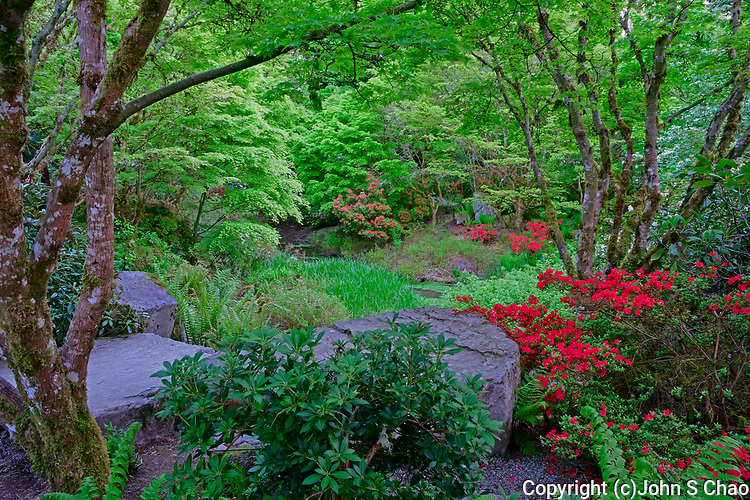 Yao Japanese Garden's NE viewpoint in spring, Bellevue Botanical Garden, Bellevue, Washington