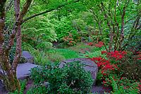 Yao Japanese Garden's NE viewpoint in spring, Bellevue Botanical Garden, Bellevue, Washington