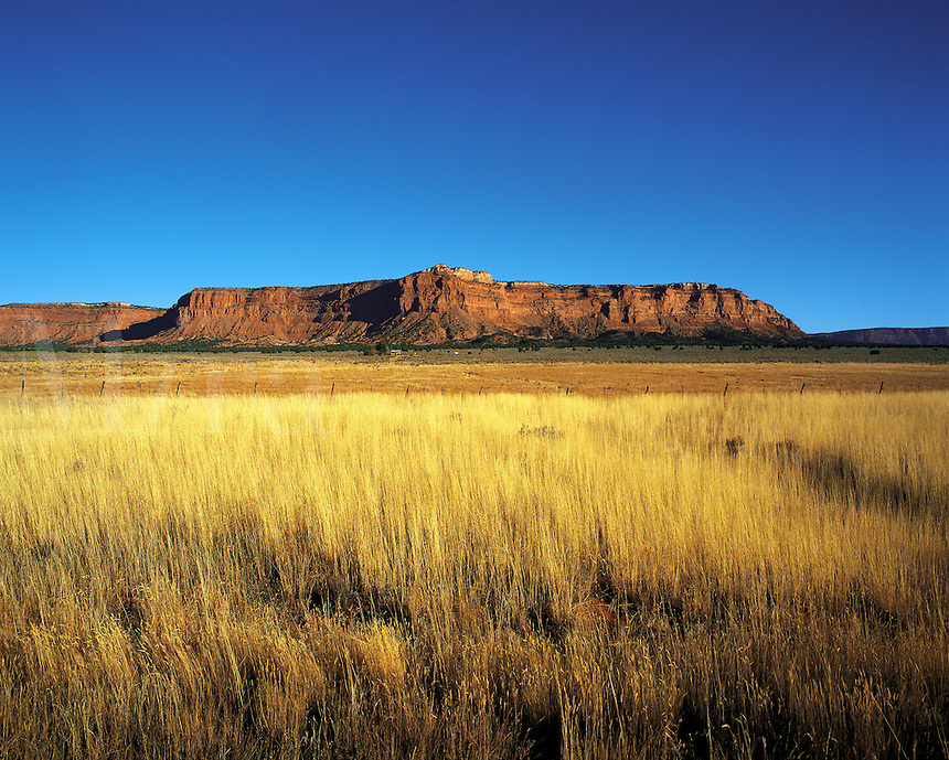 Distant sandstone butte seen across yellowing autumn grasses near Flagstaff, Arizona, US