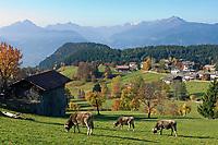 Italien, Suedtirol, Hafling Oberdorf: Wandergebiet oberhalb Merans   Italy, South Tyrol, Alto Adige, Avelengo: hinking area above Merano