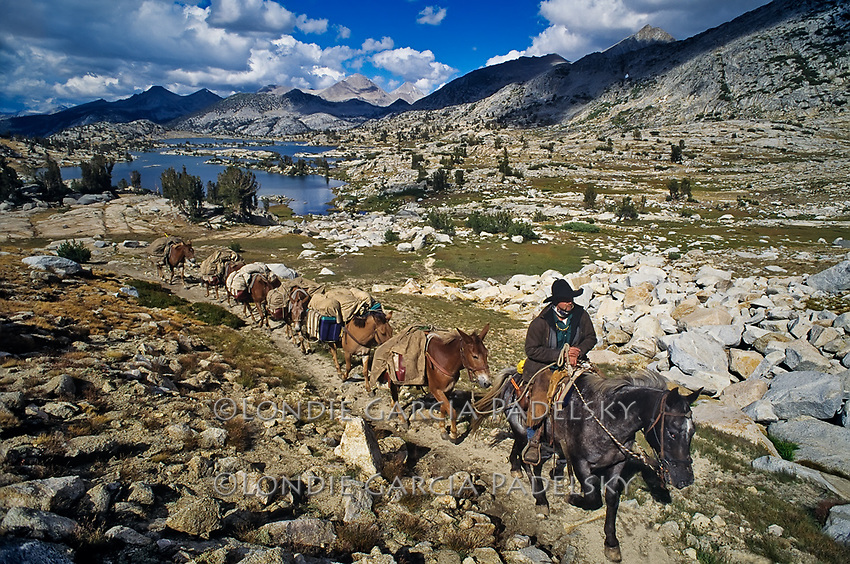 Cowboy leading a string of pack mules at Marie Lake near Seldon Pass, Sierra National Forest, Fresno County, California