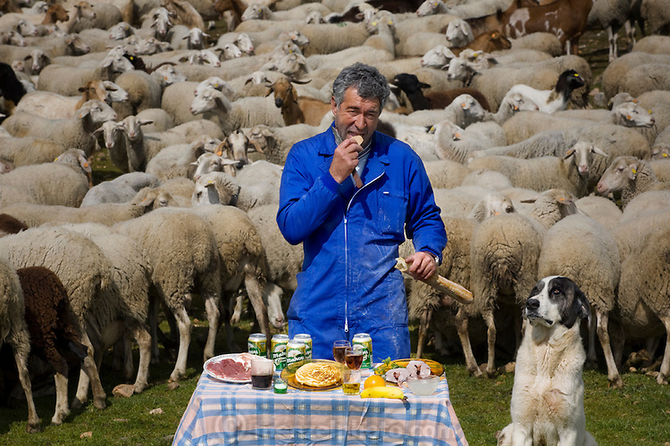 Miguel Ángel Martín Cerrada, a shepherd, with his typical day's worth of food, surrounded by his flock and sheep-herding mastiff in Zarzuela de Jadraque, Spain. The caloric value of his day's worth of food in the month of April was 3,800 kcals. He is 47 years old; 5 feet, 7,5 inches tall; and 154 pounds. Miguel and his younger brother, Paco, tend 400 sheep and 60 goats on their family ranch in the tiny village of Zarzuela de Jadraque, 75 miles northeast of Madrid. Since their mother died in 2006, their father, 84-year-old Máximo Martín Pérez, divides his time between living with his sons in the country and living with his two daughters in Madrid. While outdoors from sunrise to sunset tending the flock, Miguel and Paco drink beer and wine, rather than water, believing that alcohol keeps them warm. Although animal husbandry has been the family occupation for many generations, both brothers are bachelors and the shepherding lineage will most likely end with them. MODEL RELEASED.